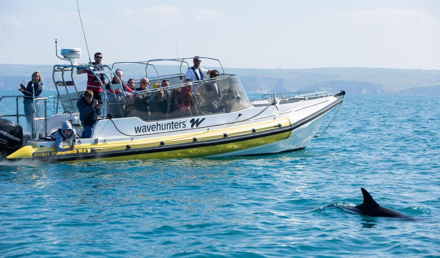 A Wavehunters trip on a sea safari spot a pod of dolphins out off the Cornish coast. Wavehunters run a range of coastal activities with something to suit everyone.